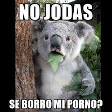 Meme Porno - no jodas se borro mi porno koala can t believe it meme generator