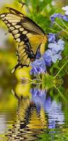 2642 best hummingbirds u0026 butterflies love them images on pinterest