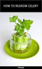 143 best little kitchen garden images on pinterest gardening