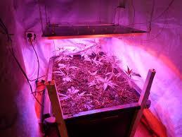 led marijuana grow lights the garden spout