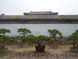 ornamental pine trees in dai temple photo