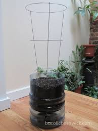Diy Self Watering Herb Garden Diy Self Watering Container From A 5 Gallon Water Cooler Bottle