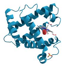 biochemistry wikipedia