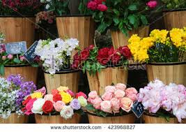 flower shops in flower shop stock images royalty free images vectors