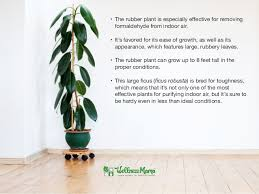 Air Purifying Plants 9 Air by Best Houseplants For Purifying Indoor Air