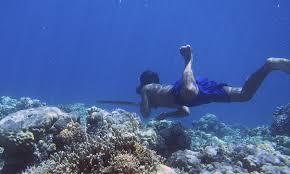 imagenes extraordinarias del mar descubren el secreto de las capacidades extraordinarias de los