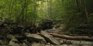 Tennessee Forest images Protected 4 061 acres in sherwood franklin marion cos the jpg