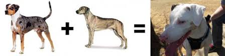 american pitbull terrier rhodesian ridgeback mix 26 mutt math equations barkpost