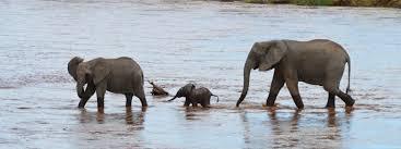 african safari animals kenya safari animals and adventure global travel press
