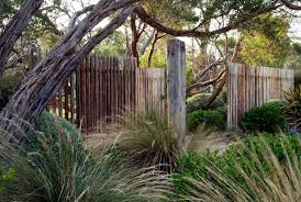 dry garden with grasses clipped shrubs windswept trees open