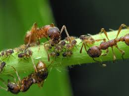 getting rid of ants in potted plants u2013 how to keep ants out of
