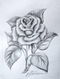 pencil drawing the rose u2026 art pinterest rose drawings and