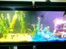 in decorations aquarium decoration ideas pictures