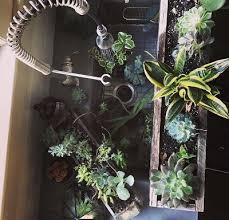 8 Houseplants That Can Survive by Three Houseplants You Won U0027t Murder U2014 The 8thsmotherhood Non