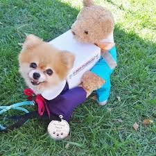 top 10 dog costumes dog pomeranians and animal