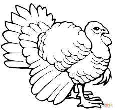 turkey tom coloring page free printable coloring pages