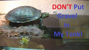 don u0027t use gravel for you turtle tank gravel can kill your turtle