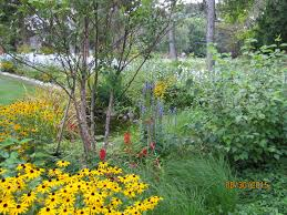 Native landscaping garden design company near ann arbor mi