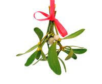 Mistletoe Decoration Mistletoe U2014 How To Make Your Own Decorations Craftfoxes