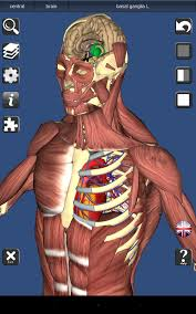 essential anatomy 3 apk 3d bones and organs anatomy 3 1 0 apk android