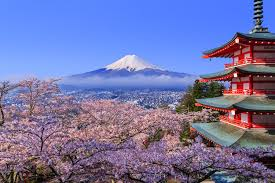 Cherry Blossom Facts by When Is The Best Time For You To Visit Japan