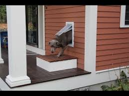 Exterior Cat Door Installing A Pet Door