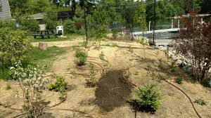 native plantings 2017 construction oneida county land and water conservation