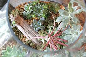 plant your own terrarium valley forge flowers