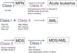 mds class class i class ii hypothesis for leukemogenesis class i open i
