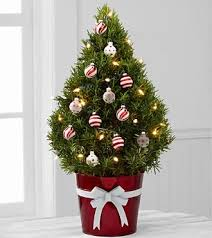live christmas tree the use of potted living christmas trees is