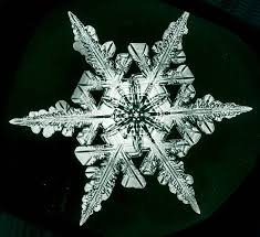 snowflake bentley book snowflakes the extraordinary micro photographs of winter snow
