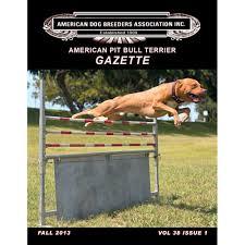 american pitbull terrier merchandise volume 38 issue 1 american pit bull terrier gazette