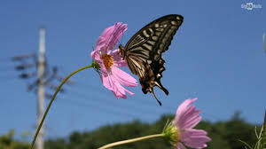 butterfly flower beautiful butterfly hd wallpaper bighdwalls
