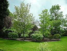 Backyard Tree Ideas Collection Landscaping With Trees Ideas Photos Best Image Libraries