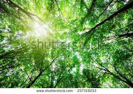 green forest free stock photos 10 627 free stock photos