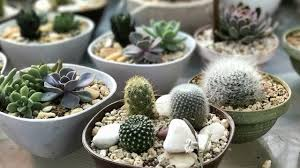 cacti and succulents amazing plants for a magnificent home decor