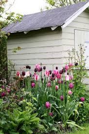 25 unique tulips garden ideas on pinterest fleur de force house