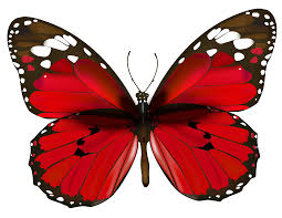 butterfly image free butterfly image
