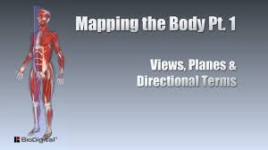 Directional Terms Human Anatomy Mapping The Body Pt 1 Views Planes And Directional Terms Youtube