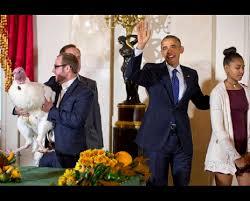 thanksgiving turkey pardon obama gets the bill for white house thanksgiving times free press
