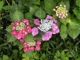 Free Images Flower Petal Botany Flora Purple Flowers Shrub