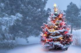 vermont christmas tree christmas trees 2017