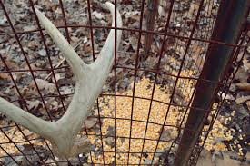 When Do Deer Shed Their Antlers by Why You Shouldn U0027t Use Shed Antler Traps Bone Collector