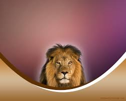 free the lion king backgrounds for powerpoint animal ppt templates