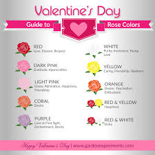 The Meaning Of Rose Colors A Valentine U0027s Day Guide