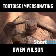 Owen Wilson Meme - tortoise impersonating owen wilson watch or download downvids net