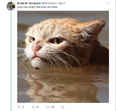 Angry Meme Cat - photo of angry cat in harvey floodwaters sparks memes