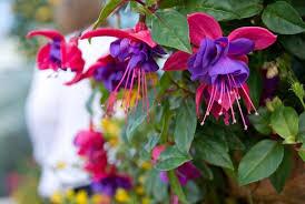 balkon grã npflanzen die 11 schönsten balkonpflanzen moebeltipps ch