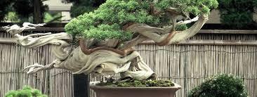 imagenes de jardines japones el jardín japonés paisajistas marbella