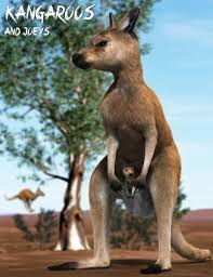 kangaroos and joeys 3d models and 3d software by daz 3d